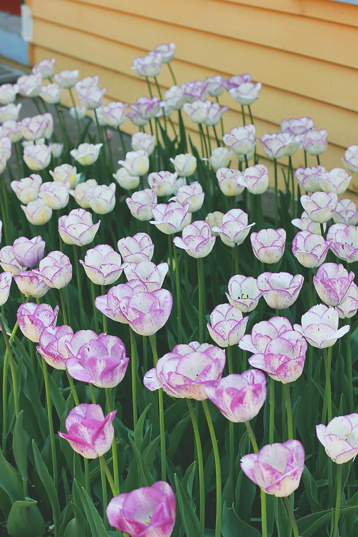 tulip-time-polka-dot-dress-14